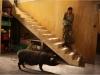le-cochon-de-gaza-photo-4