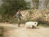 le-cochon-de-gaza-photo-8